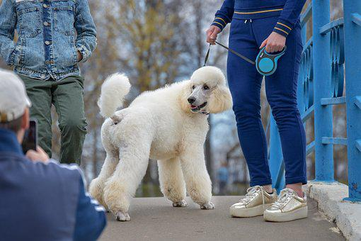 Dog, Model, Fashion, Pets, View, Animals, Portrait