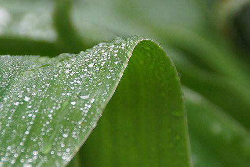 Leaf, Water, Droplets, Raindrops, Green