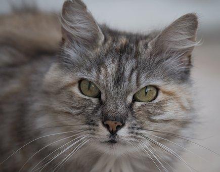 Cat, Animal, Cat Eyes, Animals, Feline, Moustache