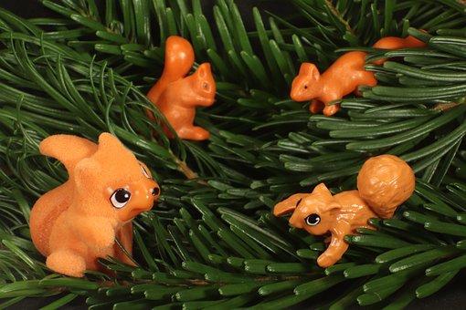 Squirrel, Pine Needles, Fir, Green, Branch, Needles