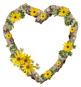 Frame, Border, Rustic, Heart, Daisy, Flower
