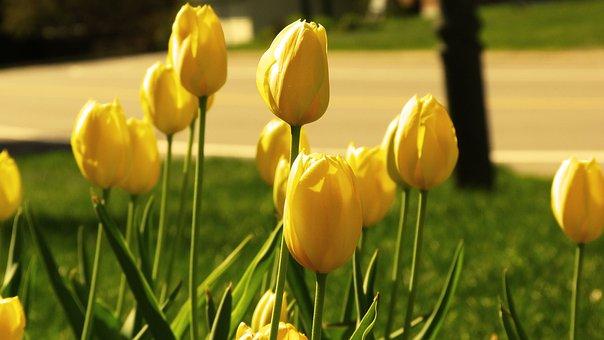 Flower, Garden, Nature, Summer Flowers, Plants