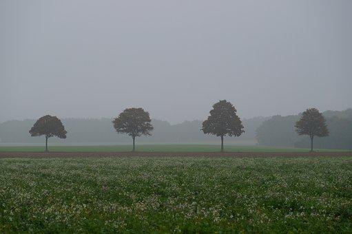 Fog, Autumn, Tree Trees, Mood, Landscape, Tree