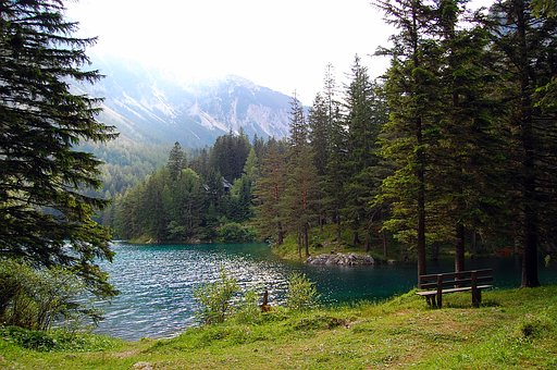 Lake, Wood, Green, Nature, Water, Mood, Log, Landscape