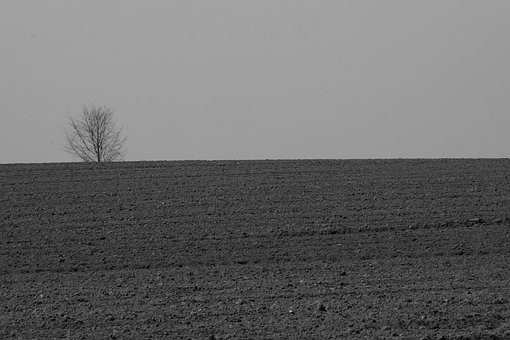 Field, Tree, Nature, Fields, Earth, Arable