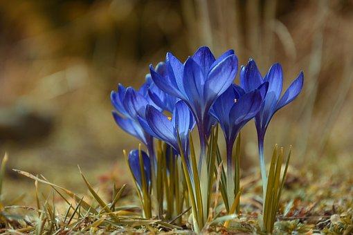 Spring, Flowers, Nature, Garden, Plant