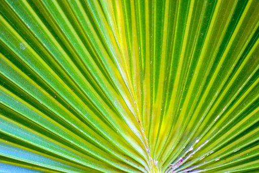 Leaf, Nature, Plant, Garden, Outdoor, Bloom, Light