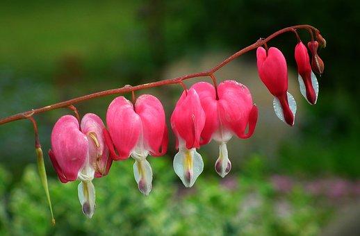 Flowers, Hearts, Pink, Garden