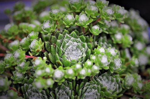 Cactus, Spider Web, Dew, Small World