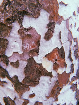 Abstract, Backdrop, Background, Bark, Camo, Camouflage