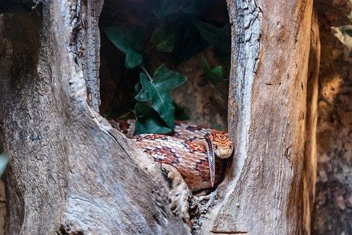 Animal, Snake, Reptile, Nature