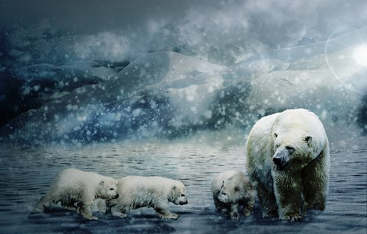 Polar Bear, Animal World, Wild Animal, Mammal, Family
