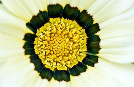Flower, Garden, Pollen, Botanical, Flora, South Africa