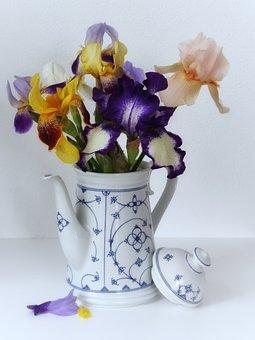 Iris, Schwertliliengewaechs, Vase, Bouquet, Beautiful