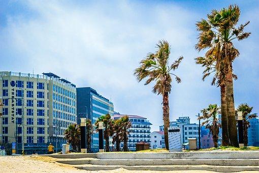 Square, Jeju, Southkorea, Palm, Tree, Building, Wind