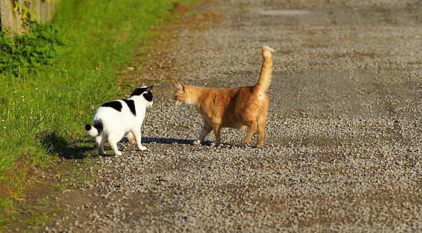 Cat, Female, Cute, Animal, Pet, Sweet, Head, Mieze