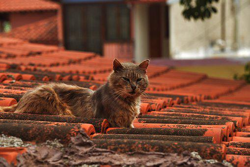 Cat, Cat On The Roof