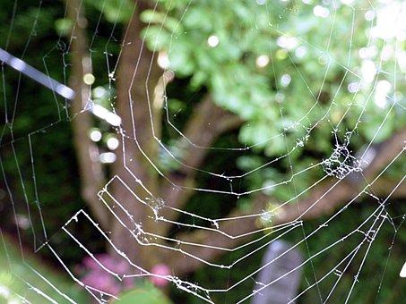 Cobweb, Network, Nature, Cobwebs, Close