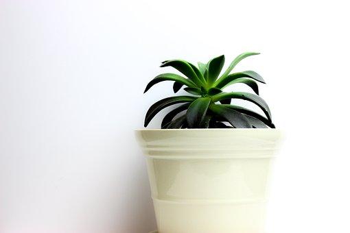 Plant, Green, Cactus, Design, Bright, Decoration