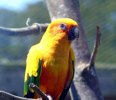 Bird, Parrot, Nature, Wild, Animal, Wildlife, Exotic
