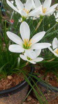 Flower, Plant, Garden, Yellow, Bloom, Nature, Blossom