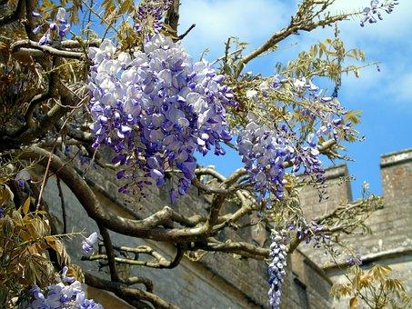 Flower, Climber, Nature, Plant, Garden, Blossom, Floral