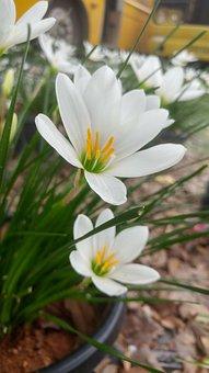 Flower, White Flower, Plant