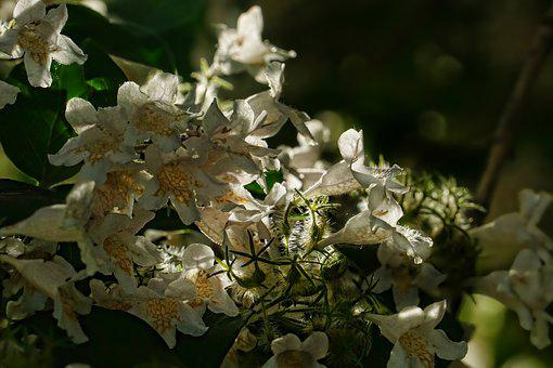 Spring, Flowering Shrub, Back Light