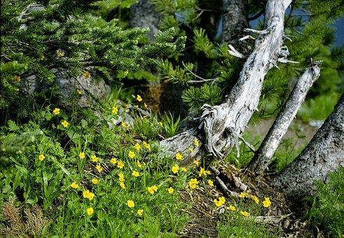 High County Wildflowers, Wildflowers, Flowers, Meadow