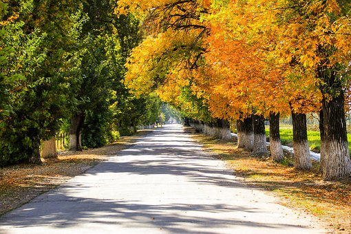 Autumn, Forest, Golden Autumn, Fall Colors