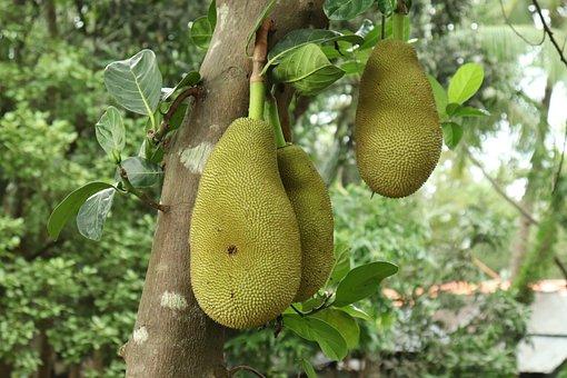 Jackfruit, Fruit, Fresh, Tropical, Natural, Sweet, Ripe