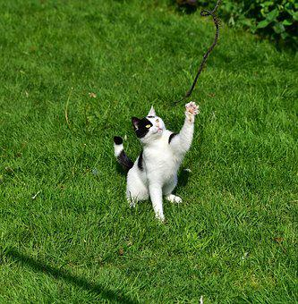 Cat, Play, Young Cat, Mieze, Domestic Cat, Grass, Fun