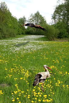 Meadow, Grass, Green, Grasses, Grass Meadow, Spring