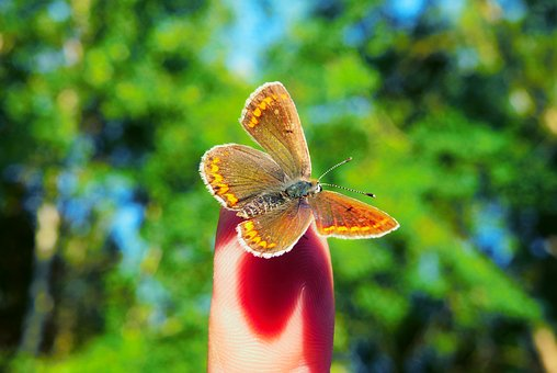 Animals, Invertebrates, Insect, Butterfly Day, Nature