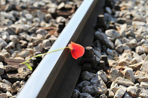 Red Poppy On Railway, Lost Love, Touching