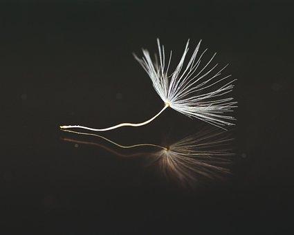 Seeds, Dandelion, Umbrella, Close, Macro, Flying Seeds