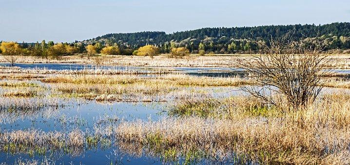 Morning In The Wetlands, Wetlands, Swamp, Morning