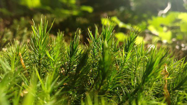 Moss, Nature