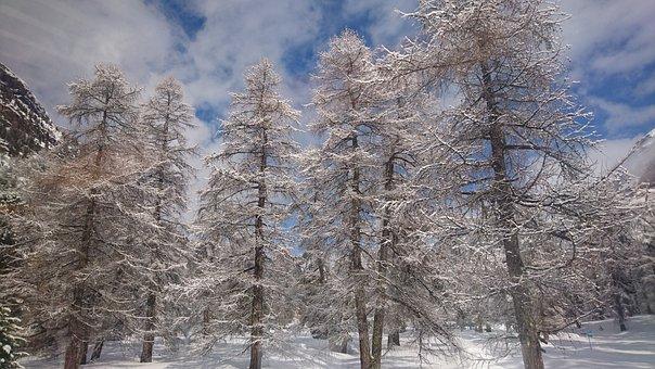 Winter, Switzerland, Alps, Trees, Cold, Snow, Mountain