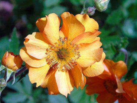 Flower, Blossom, Nature, Spring, Bloom, Head