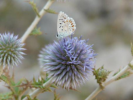 Butterfly, Flower, Nature, Summer