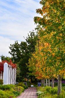 Leaves, Trees, Scenic, Autumn, Season, Nature, Branch
