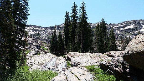 Tree, Trees, Rocky, Mountain, Wilderness, Nature