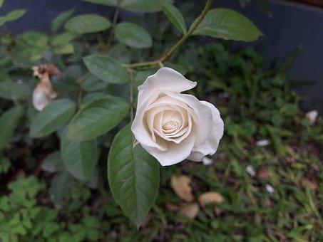 Flower, Plant, Leaf, Nature, Garden, Nice