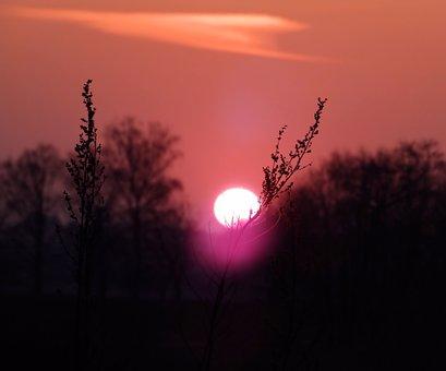Sunset, Twilight, Blade, Grass, Orange, View, Tree