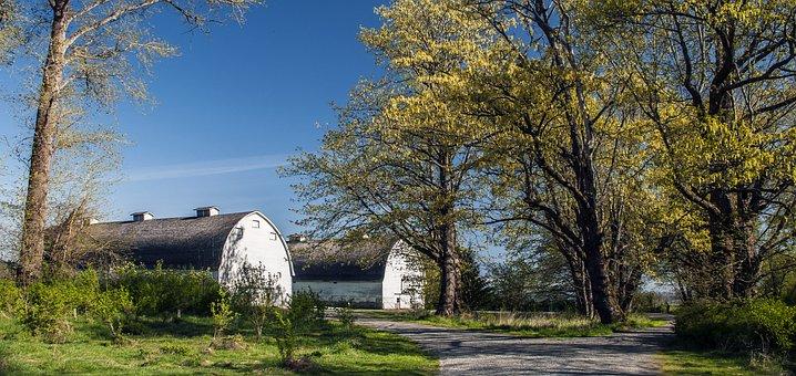Twin Milking Barns, Barns, Farm, Country, Outdoors