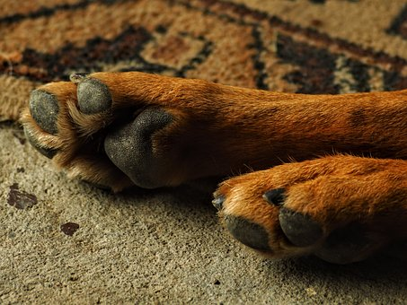 Dog, Favorite, Paw, Animal