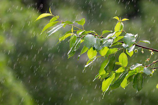 Rain, Weather, Precipitation, Raindrops