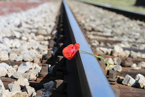 Red Poppy On Railway, Lost Love, Touching, Romantic
