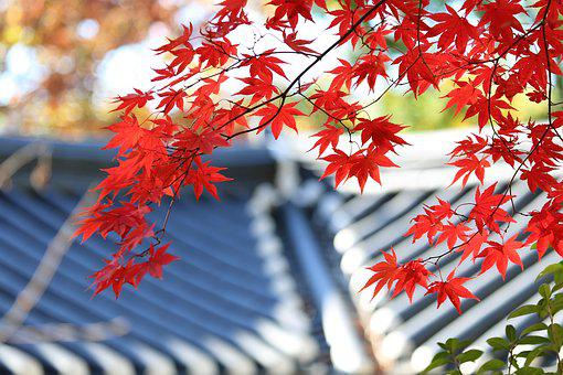 Autumn, Autumn Leaves, The Leaves, Red, Roof, Roof Tile
